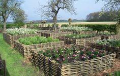 Mooie bakken voor de eetbare tuin! #moestuin #outdoor #tuin