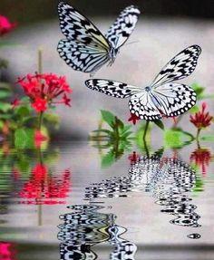I love butterflies! ☺  ♡  ツ