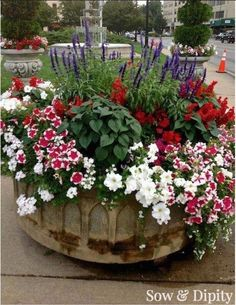 Designer Planter Ideas Red White And Blue Container Low maintenance Gardening Recipe !Red White And Blue Container Low maintenance Gardening Recipe ! Container Flowers, Flower Planters, Container Plants, Garden Planters, Container Gardening, Flower Pots, Succulent Containers, Galvanized Planters, White And Blue Flowers