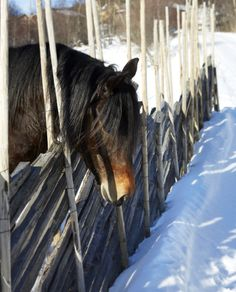 Bjorli • Slettvoll Barn, Horses, Animals, Converted Barn, Animales, Animaux, Animal, Animais, Horse