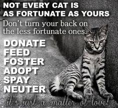 Petfinder has helped more than 25 million pets find their families through adoption. Search our extensive list of dogs, cats and other pets available for adoption and rescue near you. Crazy Cat Lady, Crazy Cats, Silly Cats, Animals Beautiful, Cute Animals, Funny Animals, Beautiful People, Stop Animal Cruelty, Cat Quotes