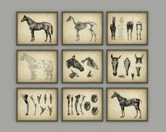 Horse Anatomy Posters Set of 9 - Horse Illustration Prints - Veterinary Horse Anatomy Charts - Equine Skeletal Anatomy - Horseriding Gift  These