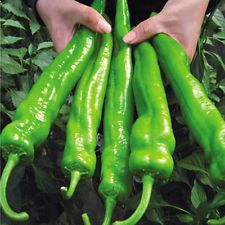100Pcs Giant Big Hybrid Pepper Seeds Vegetable Plant Seeds Home Garden Plant