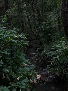 Fern Forest, Dark Landscape, Messy Art, Plant Aesthetic, Face Photography, Wild Flowers, Scenery, Aesthetics, Witchcraft