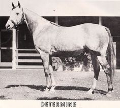 Determine, the first gray horse to win the Kentucky Derby.