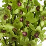 Dendrobium Orchids – Green – 70 stems