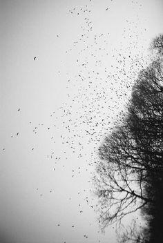 bu kuşlar bir bitmedi şu anlamsız umutlara defalarca yenisini ekledi,