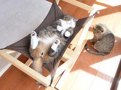 Maru:[This hammock is full.] Maru & Hana