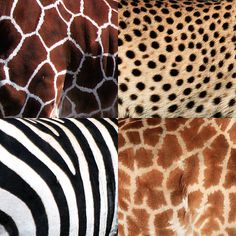 Beautiful Authentic Patterns of African Animals. Indeed ALL Living Things Have A Natural Beauty! Animal Print Fashion, Fashion Prints, Animal Print Rug, Animal Print Clothes, Patterns In Nature, Textures Patterns, Print Patterns, Nature Pattern, Beautiful Patterns