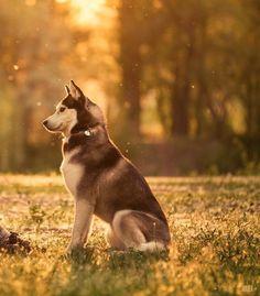 <3 huskies!!