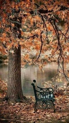 Scenic view The post Scenic view autumn scenery appeared first on Trendy. Autumn Photography, Landscape Photography, Photography Jobs, Photography Courses, Photography Business, Photography Competitions, Wedding Photography, Photography Awards, Photography Magazine