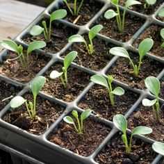 7 Tips to Start Seeds in the Winter | Photo Gallery - Yahoo! Shine