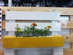 """Jardineiras ecol�gicas. Cachep�s feitos de madeira de pallet, podendo ser utilizado como floreira ou horta, pendurado na parede ou num painel de pallet que fa�o no tamanho desejado. Fa�o em diversas cores e tamanhos, sob encomenda. Ele � totalmente sustent�vel, pois as flores ou mudas v�o plantadas em caixas tipo """"longa vida"""" recicladas que se encaixam perfeitamente no v�o do pallet. <br>O pre�o n�o inclui as flores e mudas."""