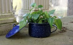 Antique Blue Graniteware/Enamelware Chamber Pot with Lid by JingleBeanFarm on Etsy
