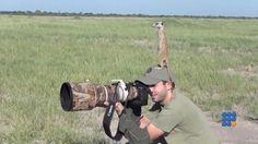 WebBuzz du 26/01/2017: Comment photographier des surcates-How to take photo of the meerkats  Les Suricates ne sont pas si farouches et prennent même un photographe pour l'un des leurs...   http://noemiconcept.com/index.php/en/departement-informatique/webbuzz-tech-info/207643-webbuzz-du-26-01-2017-comment-photographier-des-surcates-how-to-take-photo-of-the-meerkats.html#video