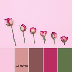 Minimalist Creative Roses Color Palette #378 – Ave Mateiu  -  Summer 2020, color palette, color palettes, colour palettes, color scheme, color inspiration, color combination, art tutorial, collage, digital art, canvas painting, wall art, home painting, photography, weddings by color, inspiration, vintage, wallpaper, background, rustic, seasonal, season, natural, nature