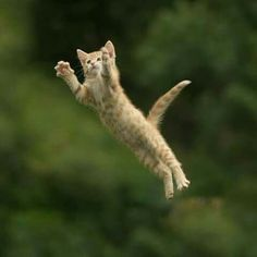 I believe i can fly 😂