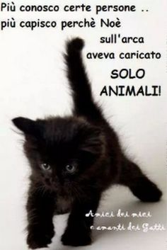 Foto Verona, Cogito Ergo Sum, Animals And Pets, Real Life, Kittens, Snoopy, Fantasy, Education, Memes