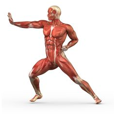 #Anatomy #Muscles