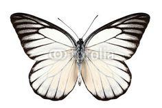 Stampa su tela Black and white butterfly. #stampa su #tela