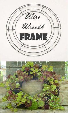 Wire Wreath Frame - make your own succulent wreath. Wire Wreath Frame, Succulent Wreath, Echeveria, Grapevine Wreath, Garden Art, Grape Vines, Whimsical, Succulents, Wreaths