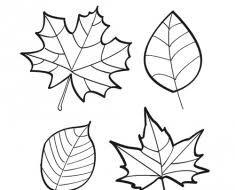 Bilderesultater for hojas otoño colorear | Arb | Leaf tattoos