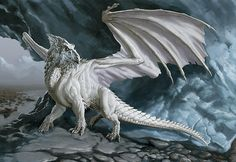 Photo of White Dragon for fans of Dragons. A white dragon! Snow Dragon, Ice Dragon, Water Dragon, Dungeons And Dragons, Dragon Images, Dragon Pictures, Dragon Pics, Dragon Artwork, Magical Creatures