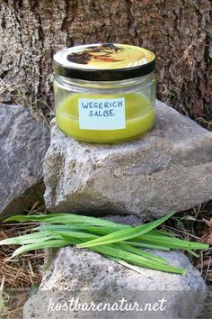 Spitzwegerich-Salbe - damit Insektenstiche nicht mehr jucken Ribwort plantain is one of the most effective medicinal plants for insect bites and skin irritations. Use his powers in a home-made ointmen Health Remedies, Home Remedies, Natural Remedies, Healing Herbs, Medicinal Plants, Herbal Cough Syrup, Diy Beauté, Insect Bites, Alternative Health