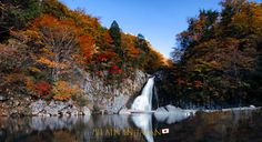 Sweet autumn has arrived. #Japan #visitjapan #japanfocus #nature #naturephotography #autumn #autumnleaves #waterfall #japan_of_pinterest #photooftheday #offthebeatenpath #日本 #自然 #秋 #紅葉 #噴水 #旅行 #旅 #旅行好きな人と繋がりたい #写真 #写真好きな人と繋がりたい Autumn Leaves Japan, Arrived, Waterfall, Outdoor, Outdoors, Waterfalls, Outdoor Games, The Great Outdoors