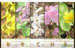 Jahreszeiten (Gruppeneinordnung) http://learningapps.org/display?v=p1peopbm501