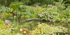 What's the best single thing you can do in your garden to help wildlife? The answer is simple - make a wildlife pond.