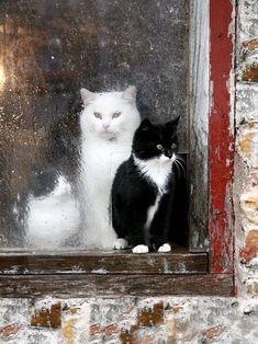 Kittens in barn window cute animals rain nature cats country window barn drops wet