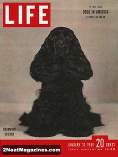 Cocker Spaniel Life Magazine 1949
