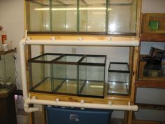 Hello I'm just getting into fish breeding and would enjoy learning more and seeing more pictures of all your setups and fish. If your fish. Aquarium Fish Store, Saltwater Aquarium Setup, Aquarium Sump, Diy Aquarium, Aquarium Ideas, Discus Fish, Betta Fish, Aquariums, Floating Wall Desk