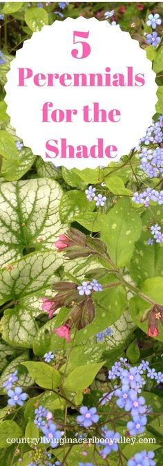 Flowers that grow great in the shade. How to make a flower bed. Perennial shade loving plants that you will love. #perennial #flowers #shade #gardenDIY