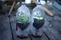 Instructions for DIY planting containers made from recycled materials (2-liter soda bottles) for seed starting. Earth friendly craft, perfect for kids, winter sowing, etc.