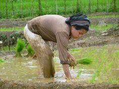 Adi Woman, Aalo, India Photo credits : Lucas ROUSSEAU