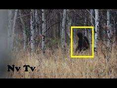 BRAVE!! HUNTER FILMS A MASSIVE BIGFOOT!! - Utah, USA (2015) - HD