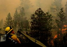 Killing the Flames: Fighting Forest Fires - http://antagonismosocial.net/killing-the-flames-fighting-forest-fires/