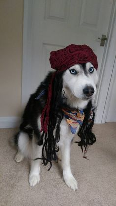 Huskies of the Caribbean are much cuter than Pirates of the Caribbean.