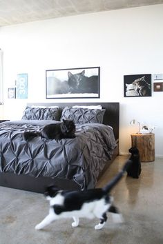 Love the cats, the pics, the wood, the color scheme… but I know from firsthand experience that kind of comforter rips incredibly easily around the tucks. SO cute, but not practical at my house. Alas… :(