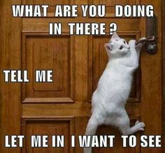 funny cats Cat memes - kitty cat humor funny joke gato chat captions feline laugh photo