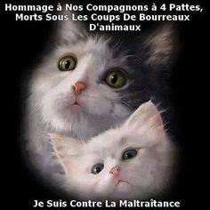 je suis contre la maltraitance animale !