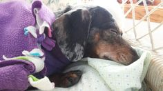 Living With & Caring for a Dog with Seizures & IVDD - Let Acceptance, Patience, & Time Be Your Friends.