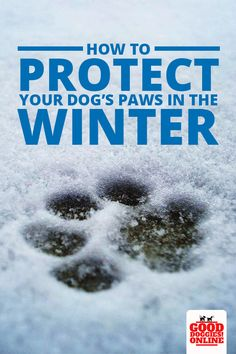 Dogs How to Protect Your Dog's Paws in the Winter. Your dog's paws need special attention, especially in the winter. Check out these dog care tips to keep your dog's feet safe in winter. Dog Health Tips, Dog Health Care, Dog Care Tips, Pet Care, Pet Tips, Hatsune Miku, Dog Illnesses, Tortoise As Pets, Cute Dog Photos