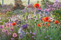 Papaver, Allium and Persicaria Dream Garden, Garden Art, Garden Plants, Prairie Garden, Garden Cottage, Black Flowers, Wild Flowers, Plant Design, Garden Design