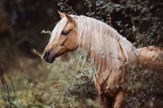 """Elsa (@caballoclasico) on Instagram: """"Farsante ❤❤ . Thank you so much dearest @carinaforestinmay for this stunning pic of my hearthorse …"""""""