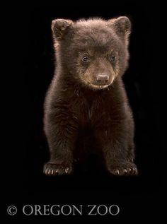 bear, ohhh I just feel in love! :)