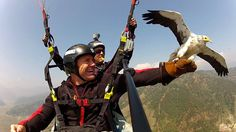 Paragliding at another level: parahawking in Nepal!