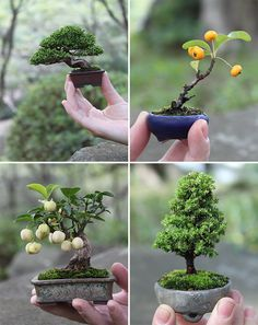 mini bonsai ~ whoever woulda thought...